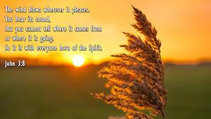 John 3.8